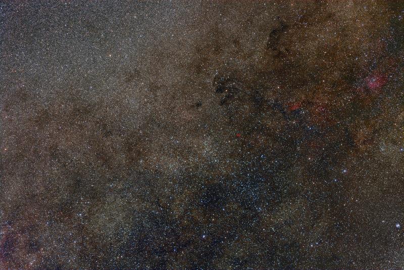 CygnusVulpecula_2016_800.jpg